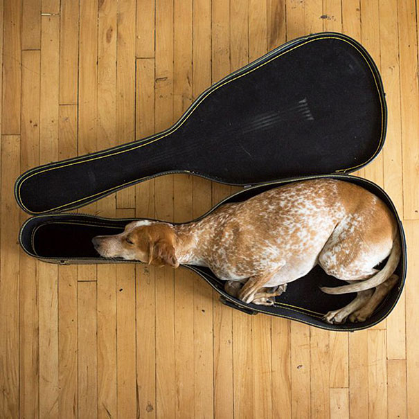 cute-sleeping-animals_11