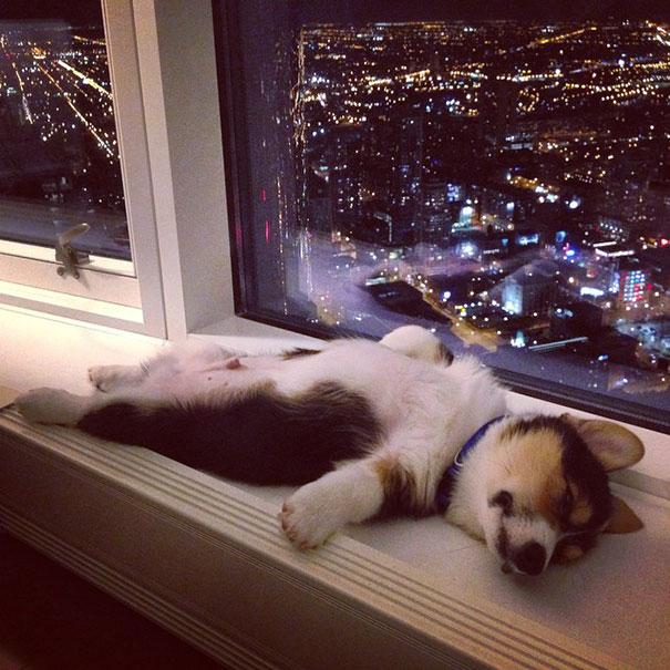 cute-sleeping-animals_12