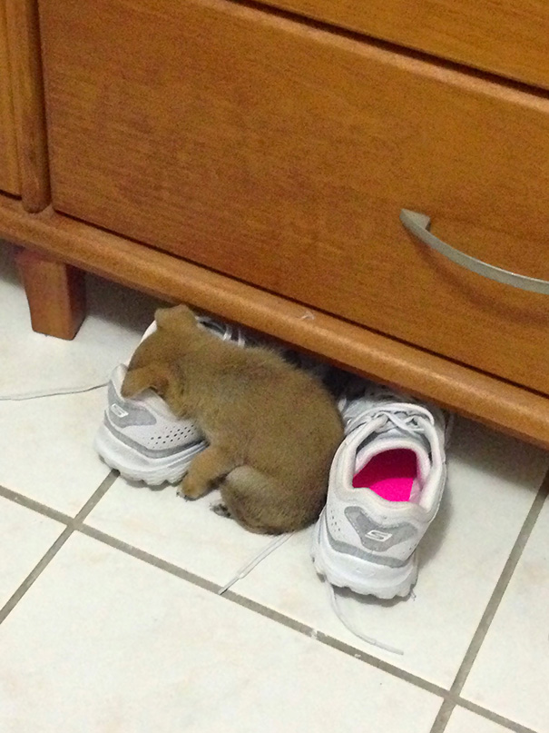 cute-sleeping-animals_4