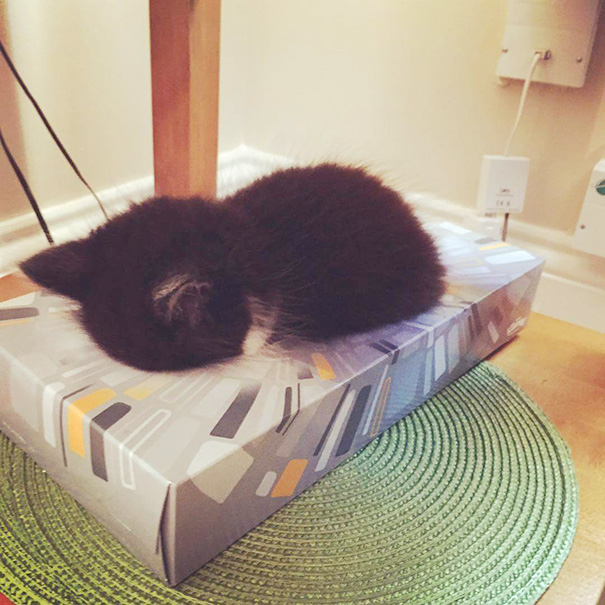 cute-sleeping-animals_6