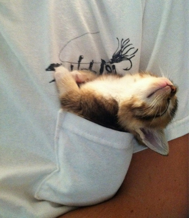cute-sleeping-animals_7