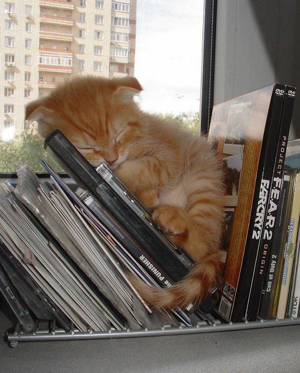 cute-sleeping-animals_8