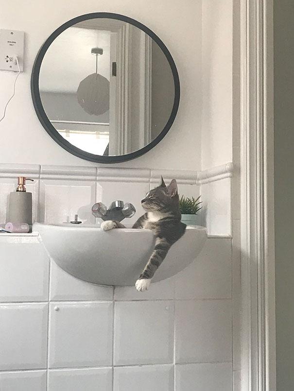 猫是液体的–尤其在睡觉的时候缩略图