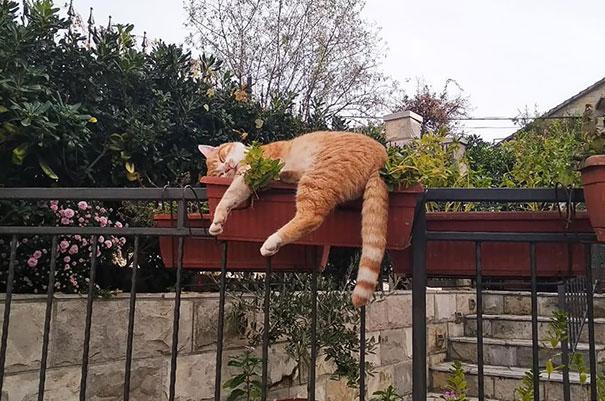 猫是液体的–尤其在睡觉的时候插图14