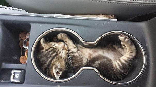 猫是液体的–尤其在睡觉的时候插图16