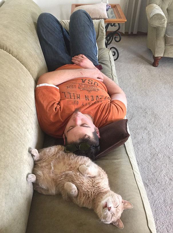 猫是液体的–尤其在睡觉的时候插图19