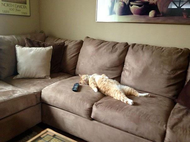 猫是液体的–尤其在睡觉的时候插图2