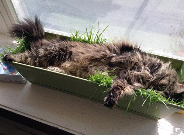 猫是液体的–尤其在睡觉的时候插图20