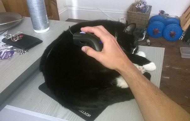 猫是液体的–尤其在睡觉的时候插图28
