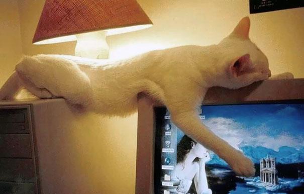 猫是液体的–尤其在睡觉的时候插图30