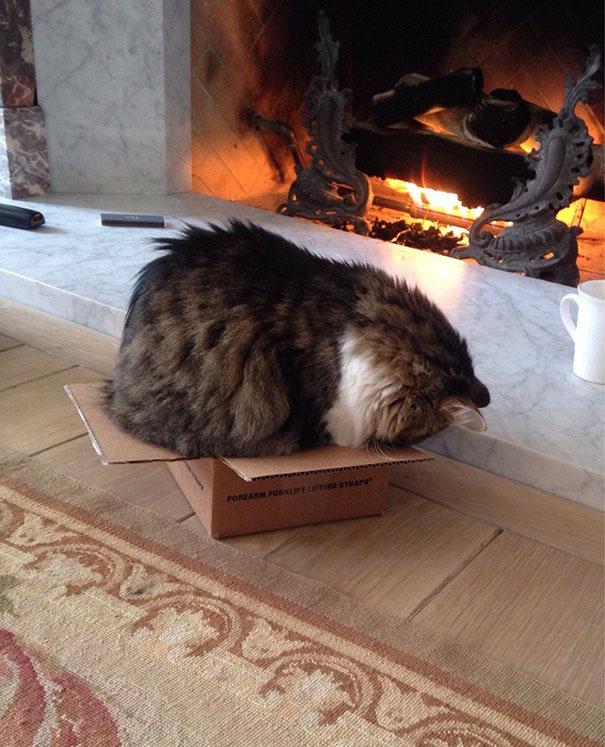 猫是液体的–尤其在睡觉的时候插图32