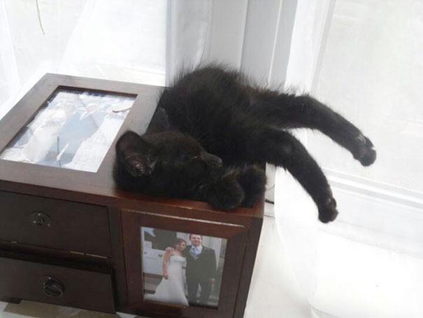 猫是液体的–尤其在睡觉的时候插图34