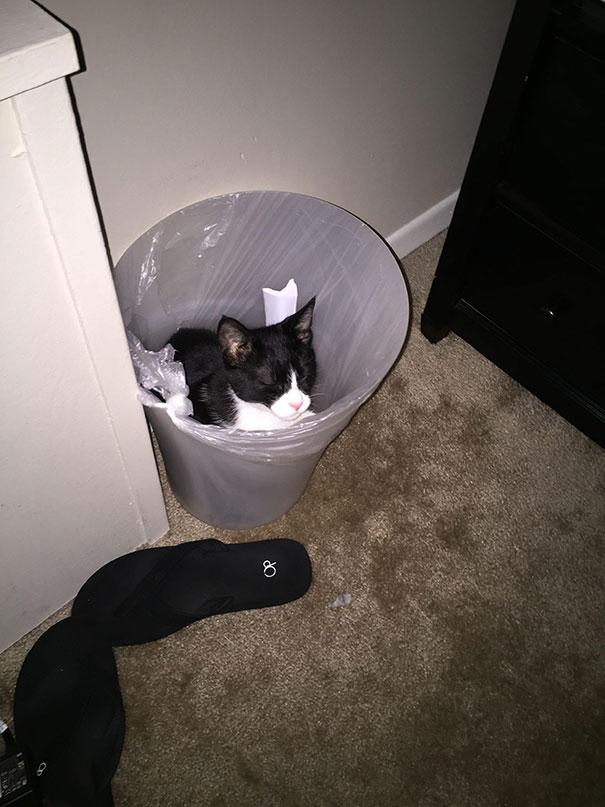 猫是液体的–尤其在睡觉的时候插图35