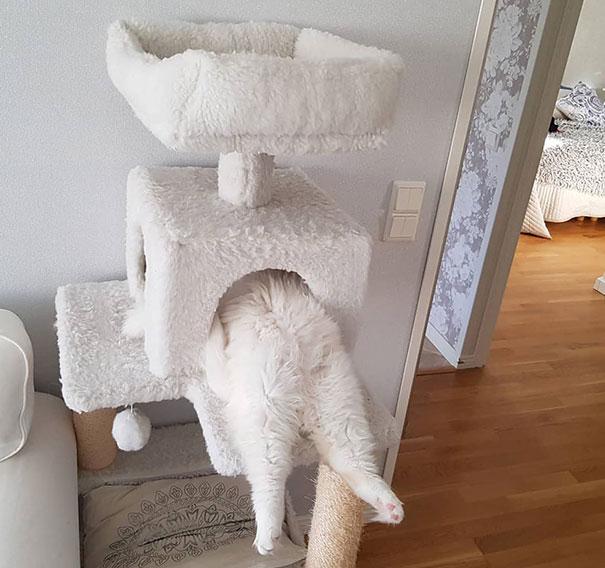 猫是液体的–尤其在睡觉的时候插图37