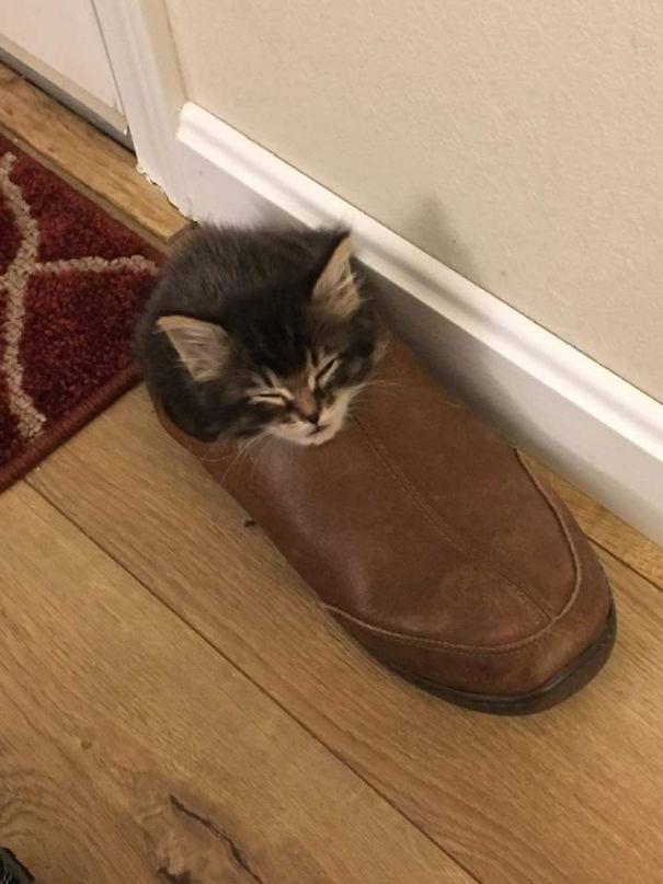 猫是液体的–尤其在睡觉的时候插图46