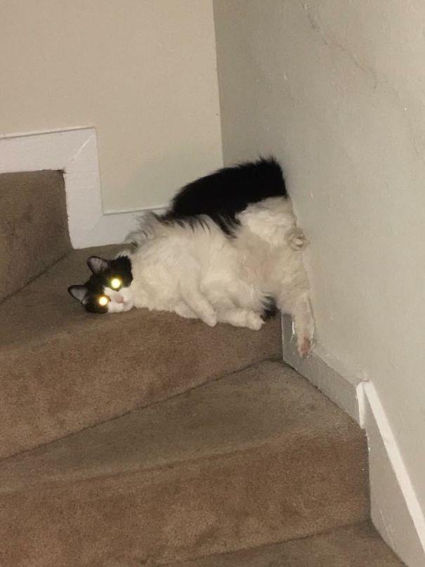 猫是液体的–尤其在睡觉的时候插图48
