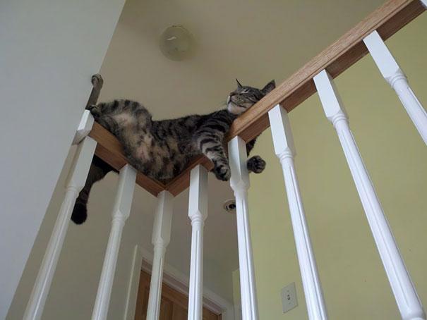 猫是液体的–尤其在睡觉的时候插图6