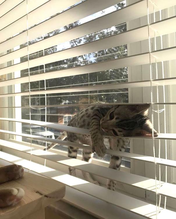 猫是液体的–尤其在睡觉的时候插图9