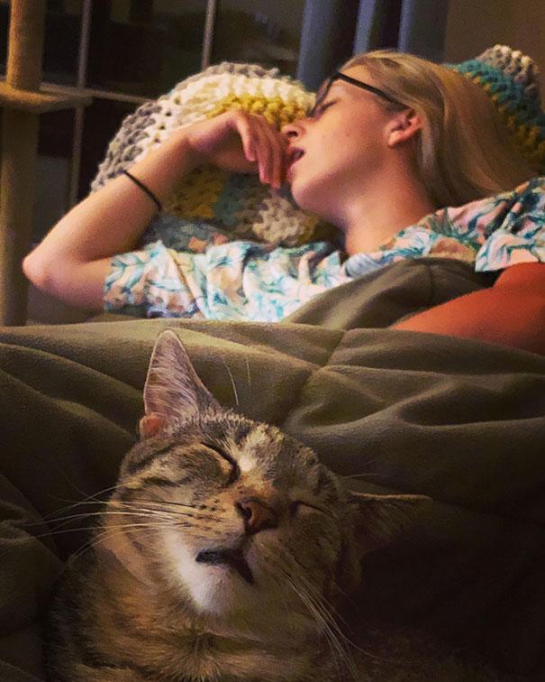 猫是液体的–尤其在睡觉的时候插图11