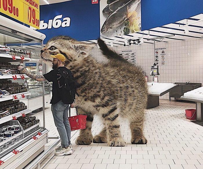 巨型猫咪的世界插图(1)