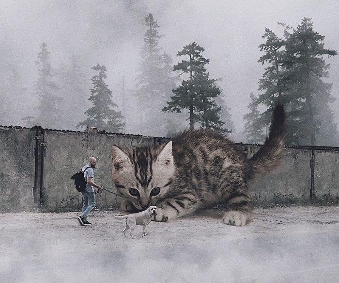 巨型猫咪的世界插图(10)