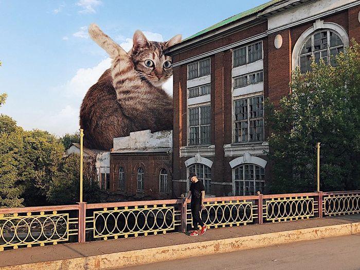 巨型猫咪的世界插图(12)