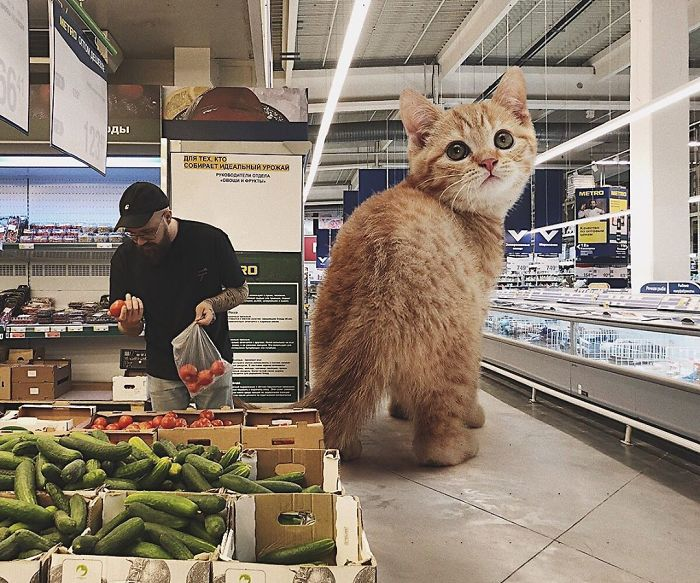 巨型猫咪的世界插图(15)