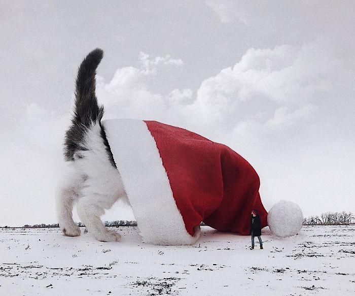 巨型猫咪的世界插图(16)