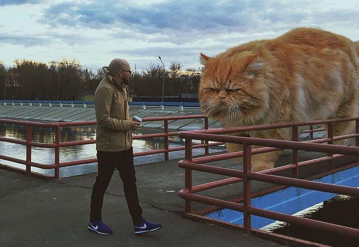 巨型猫咪的世界插图(17)