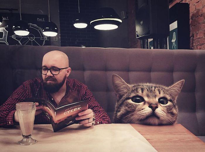 巨型猫咪的世界插图(2)