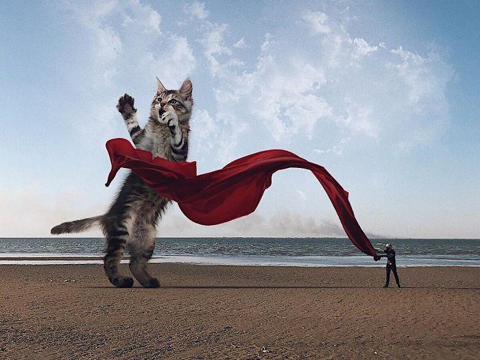 巨型猫咪的世界插图(19)