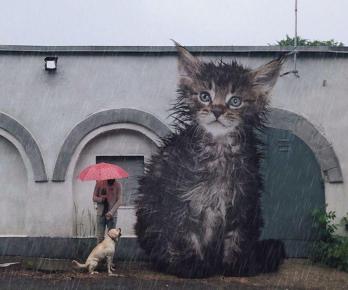 巨型猫咪的世界插图(21)