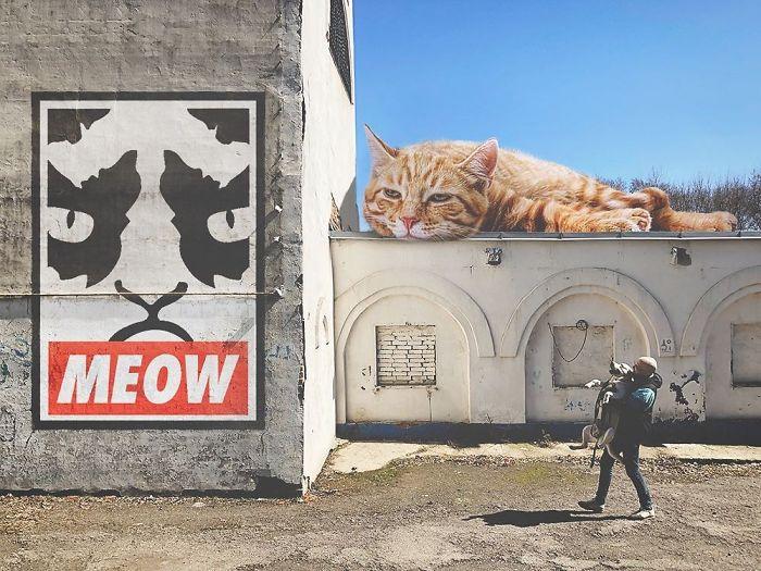 巨型猫咪的世界插图(23)