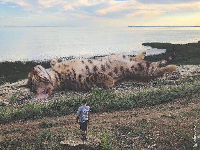 巨型猫咪的世界插图(24)