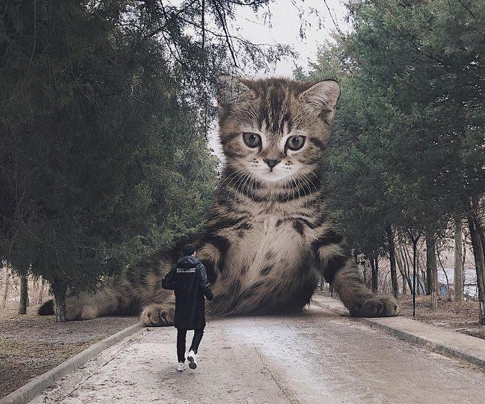巨型猫咪的世界插图(25)