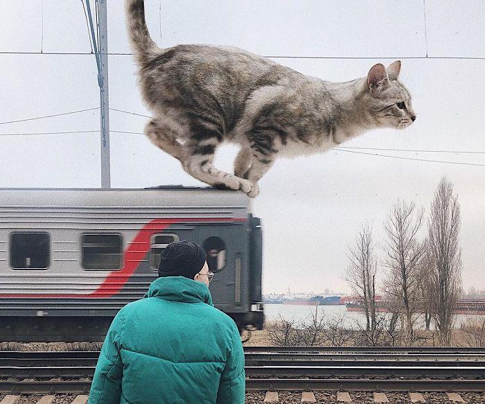 巨型猫咪的世界插图(26)