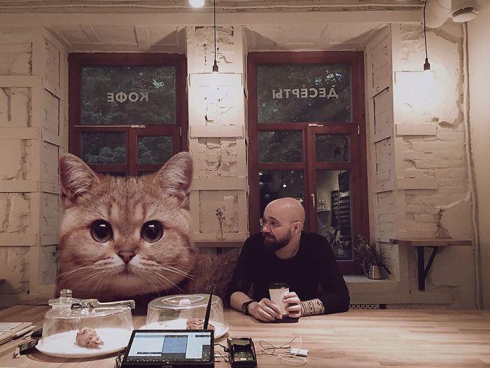 巨型猫咪的世界插图(27)
