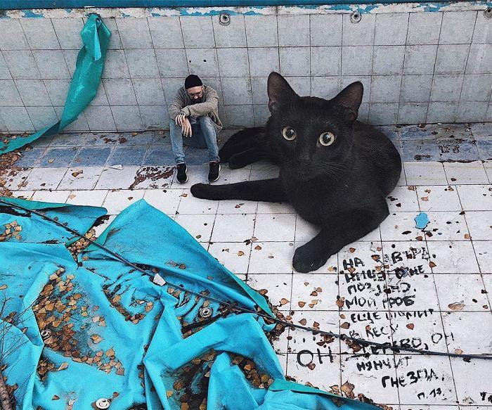 巨型猫咪的世界插图(28)
