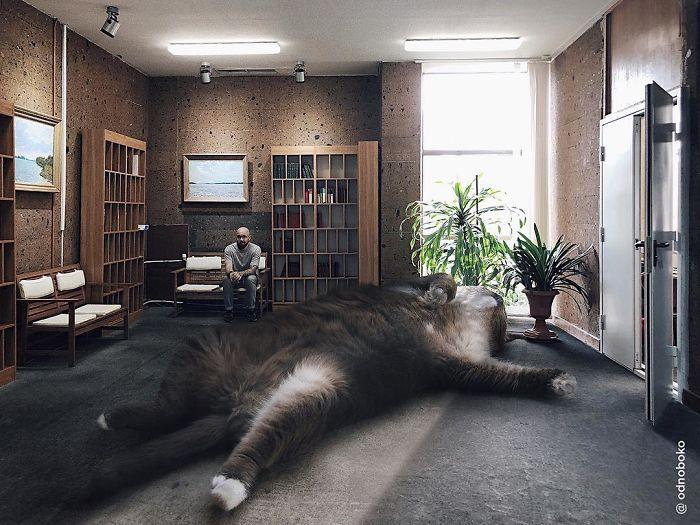 巨型猫咪的世界插图(4)