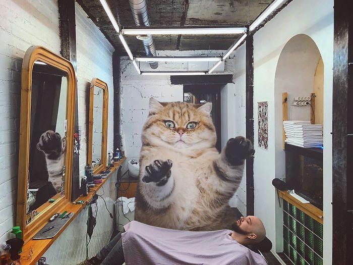 巨型猫咪的世界插图(8)