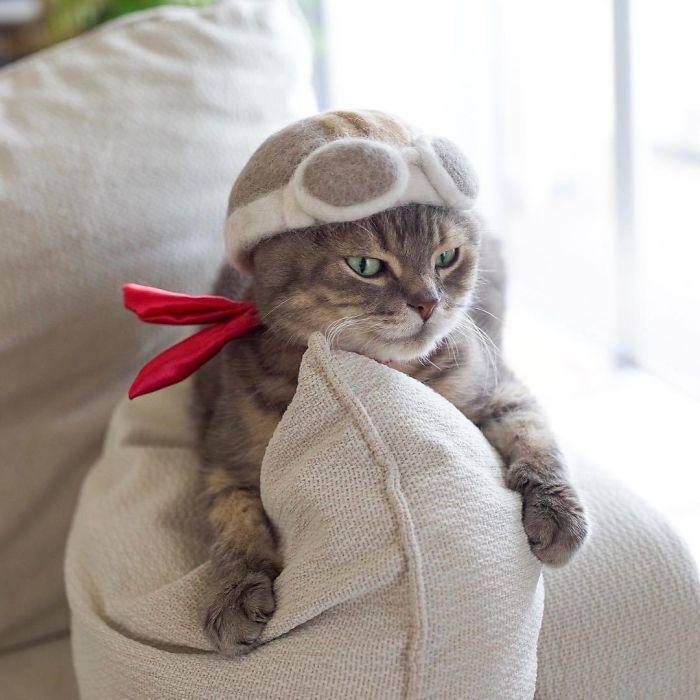 怎么让猫主子愿意戴帽子插图
