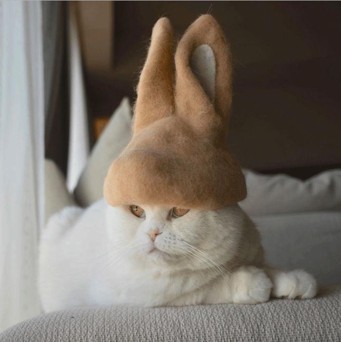 怎么让猫主子愿意戴帽子插图(9)