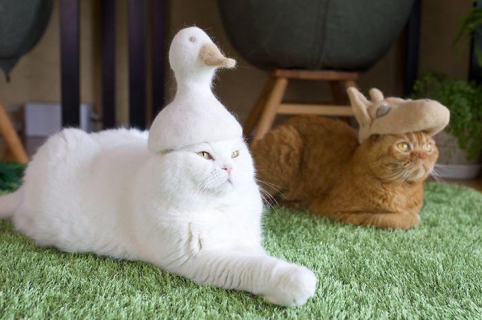 怎么让猫主子愿意戴帽子插图(10)