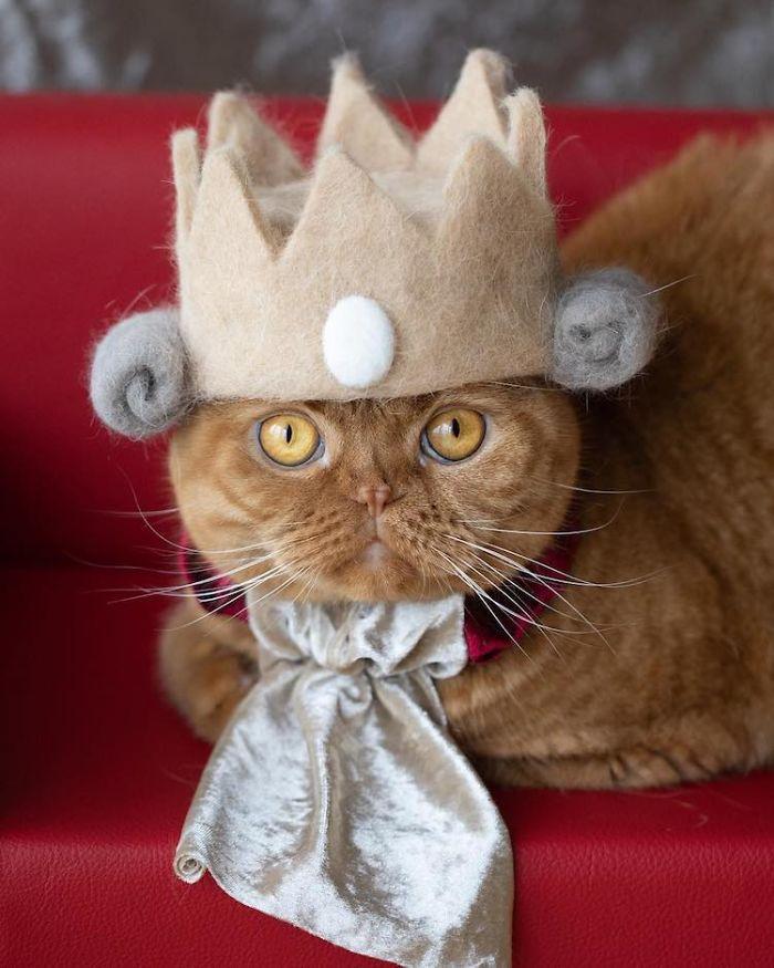 怎么让猫主子愿意戴帽子插图(11)