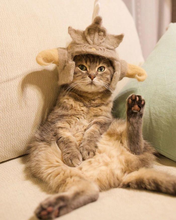 怎么让猫主子愿意戴帽子插图12