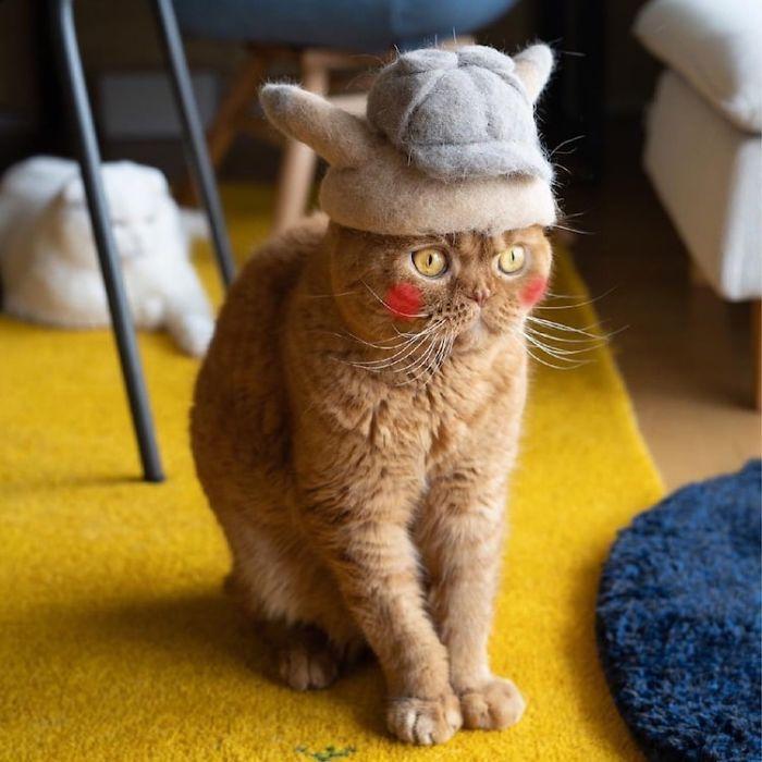 怎么让猫主子愿意戴帽子插图(13)
