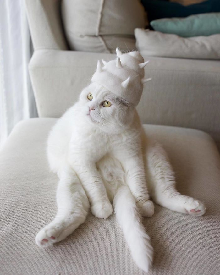 怎么让猫主子愿意戴帽子插图(14)