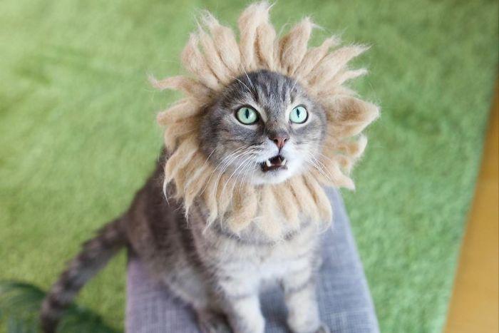 怎么让猫主子愿意戴帽子插图15