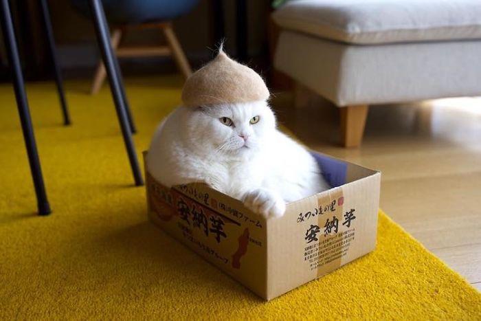 怎么让猫主子愿意戴帽子插图(16)