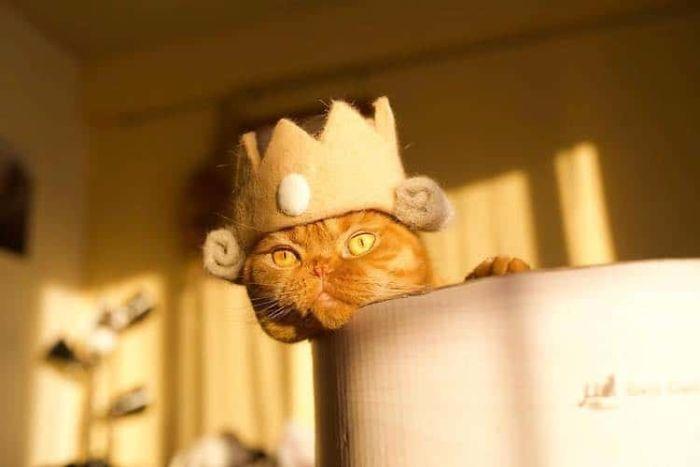 怎么让猫主子愿意戴帽子插图(17)